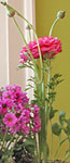 flowers key in home staging says stager Debra Gould